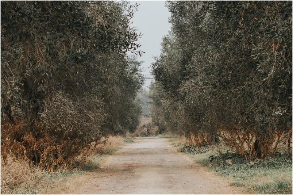 campagnaincitta-1500
