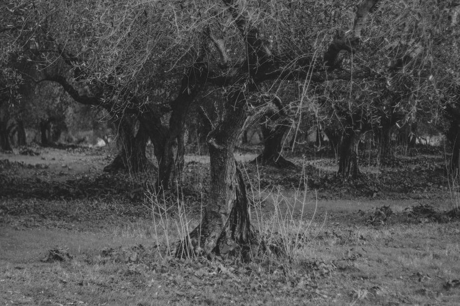 trees-2038
