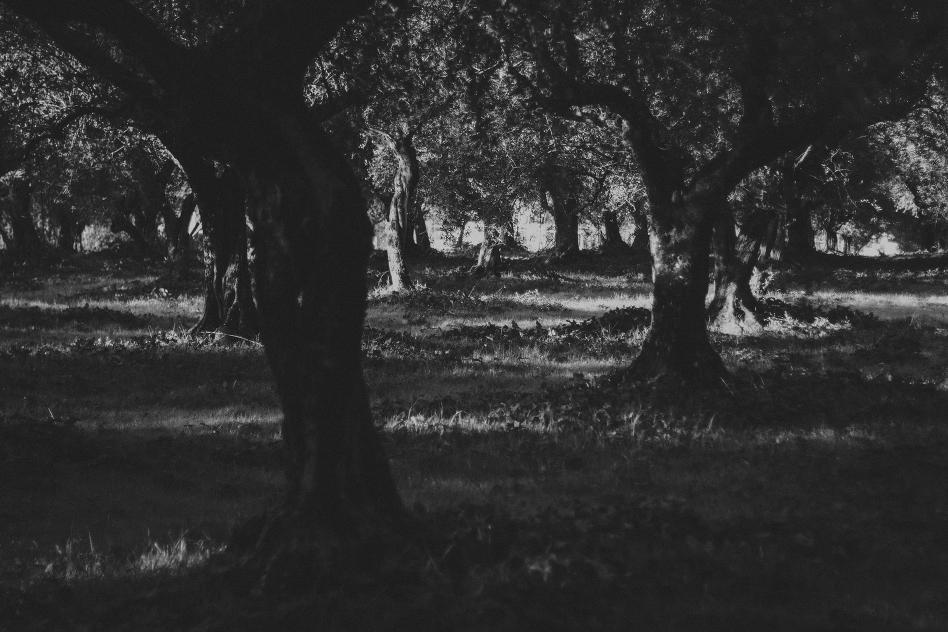 trees-2073