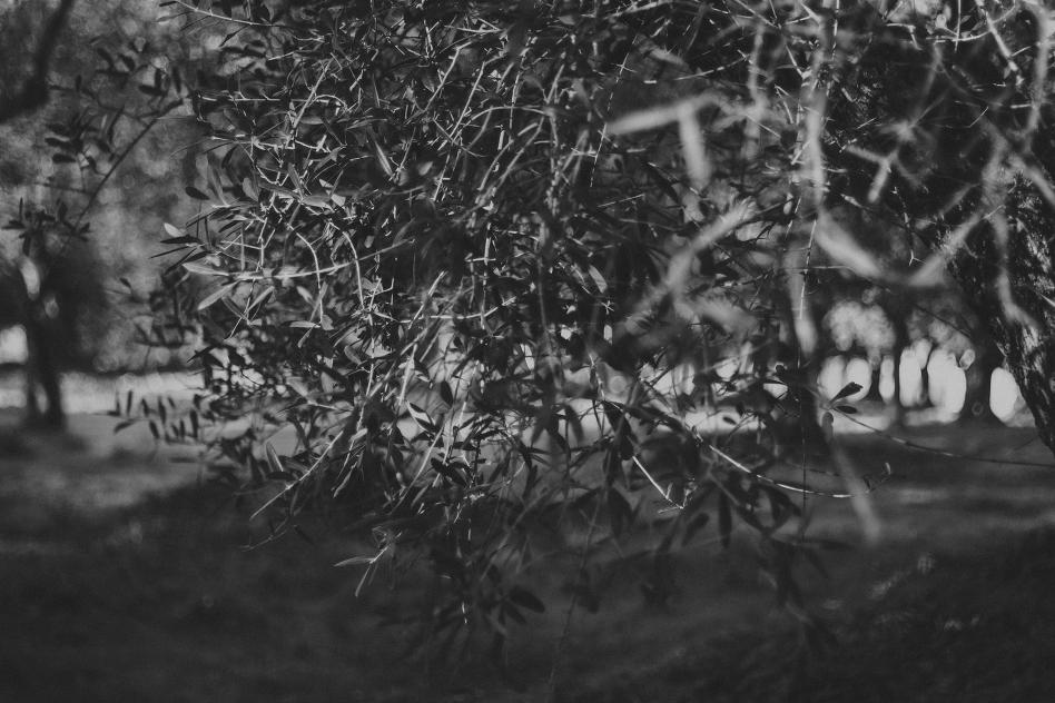trees-2074