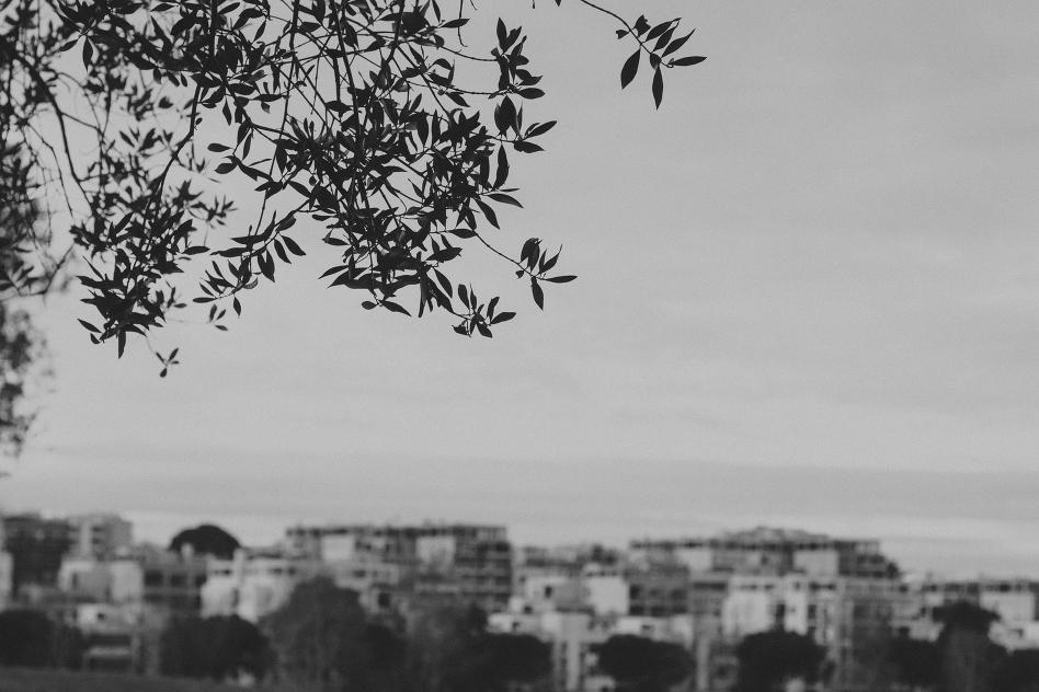 trees-2037